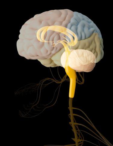 【ゴルフトレーニングの科学的根拠No.134】低ハンディゴルファーの脳機能
