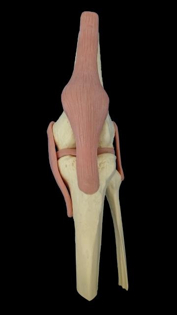 【ゴルフトレーニングの科学的根拠No.31】スイング中に起こる膝関節の回旋運動
