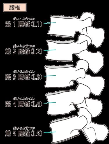 【ゴルフトレーニングの科学的根拠No.110】腰椎分節間モビリティとインスタビリティ